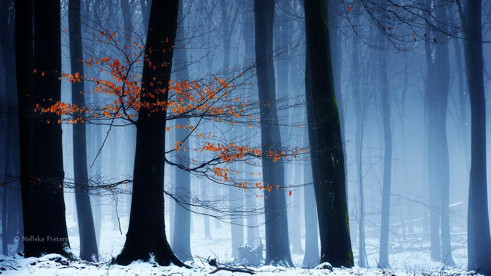 Relic Of Autumn by Nelleke