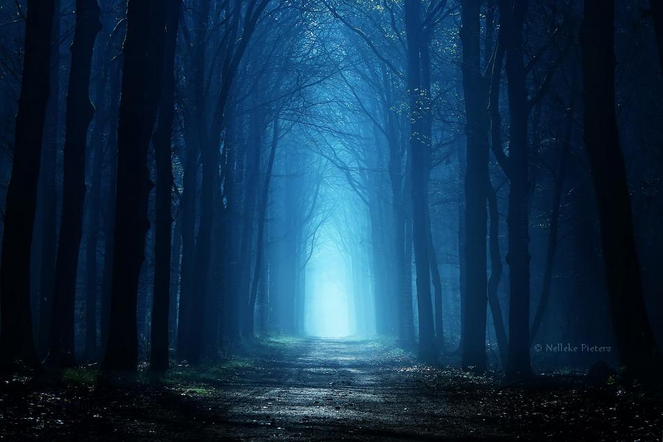 Follow The Light by Nelleke
