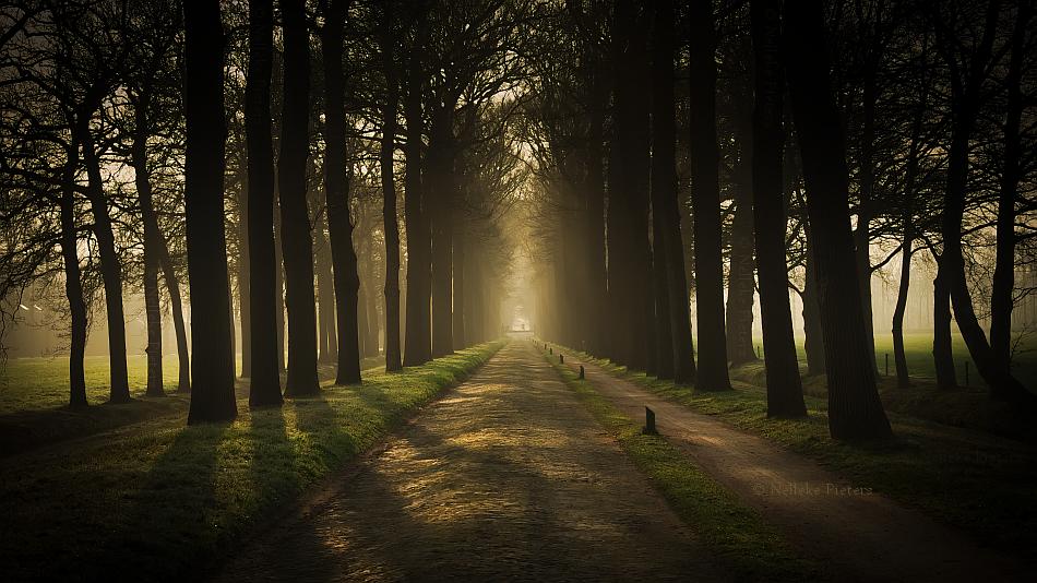 Avenue by Nelleke