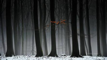 January by Nelleke