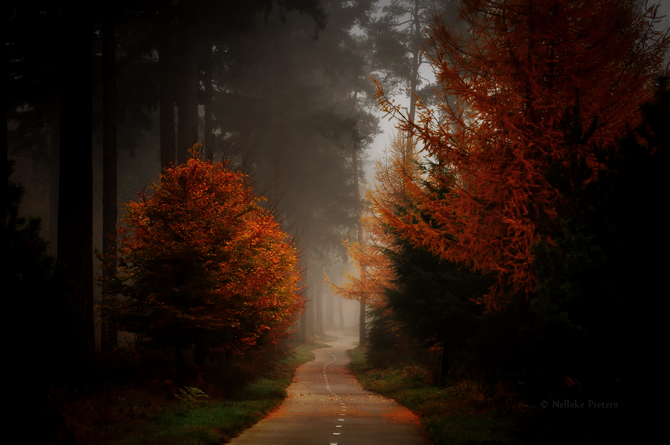 Autumn Moods by Nelleke