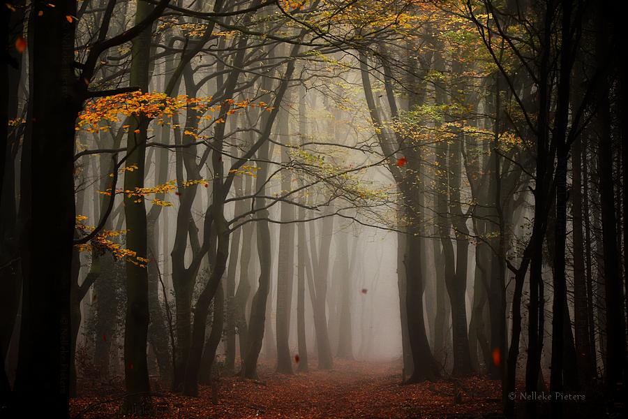 Fall by Nelleke