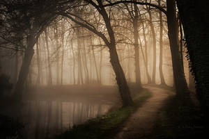 Between Night and Day by Nelleke