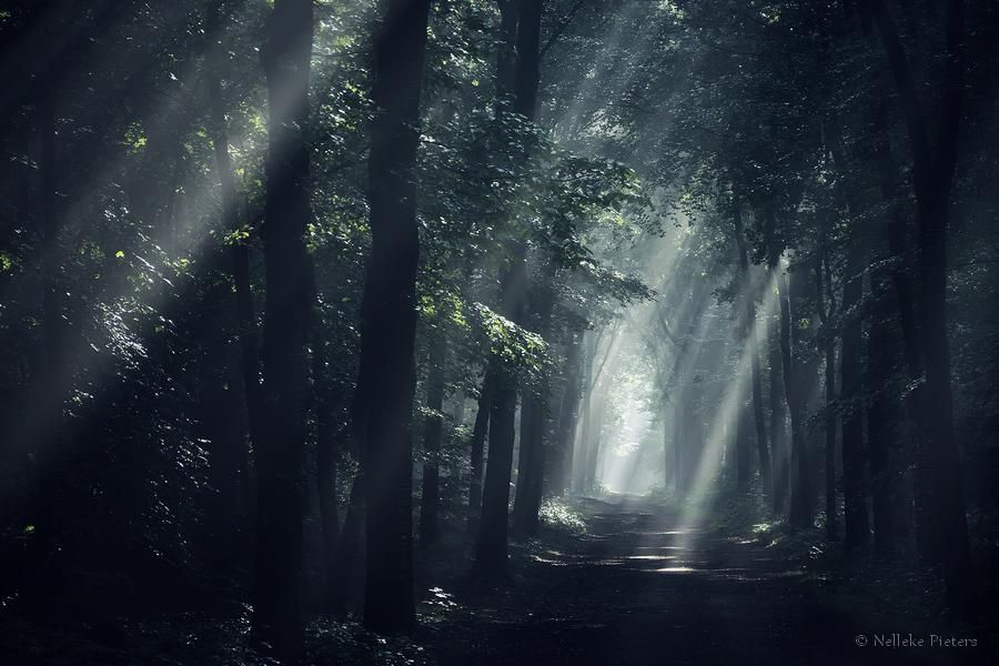 Dark by Nelleke