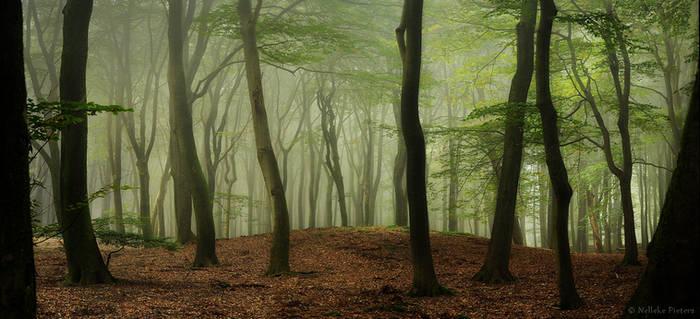 Pre-Autumn Greens