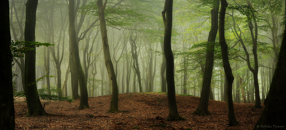 Pre-Autumn Greens by Nelleke
