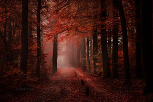 I See Fire by Nelleke