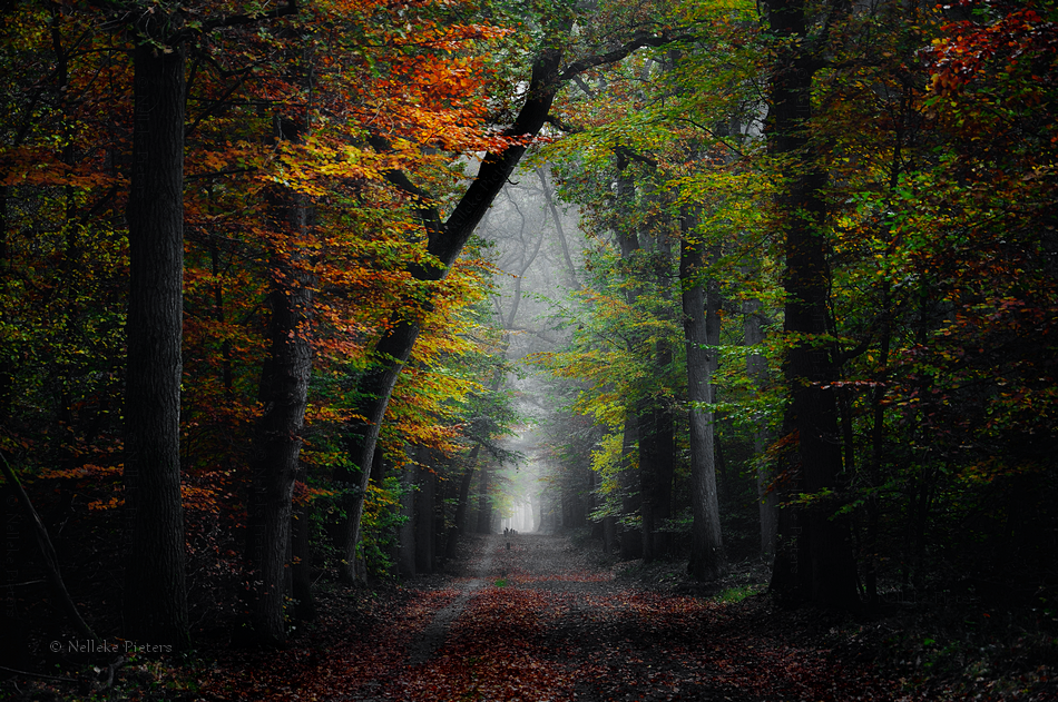 Autumn Lullaby by Nelleke