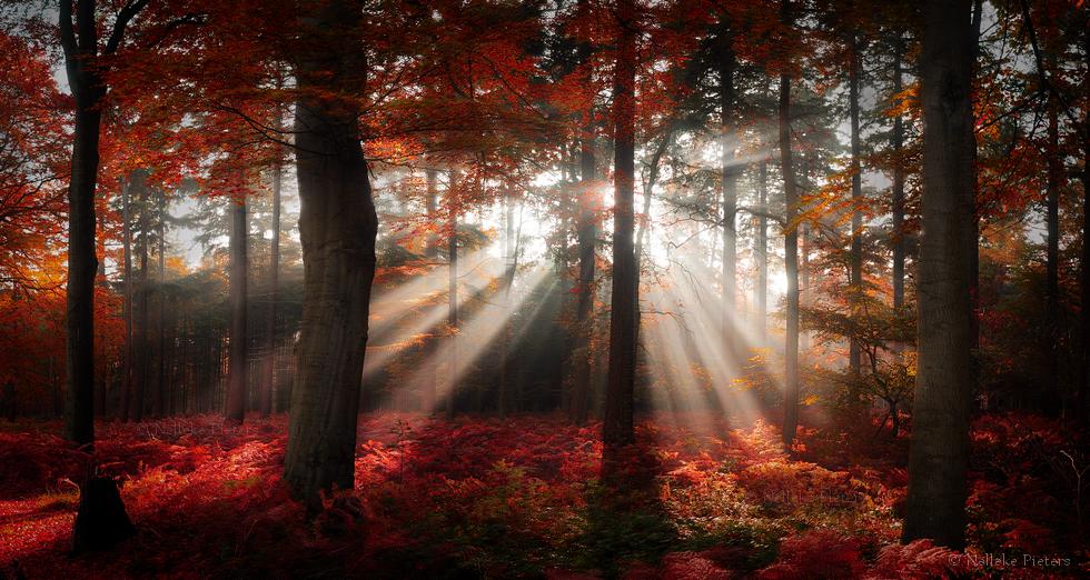 Fire Trees by Nelleke