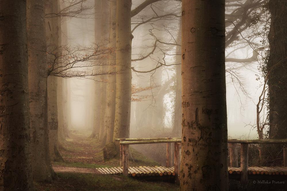 Autumn Moods in April by Nelleke