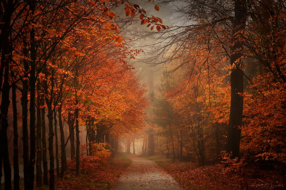 Get Lost In Autumn by Nelleke