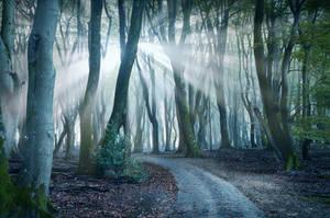 In The Spotlight by Nelleke