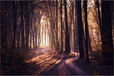 Winter Morning by Nelleke