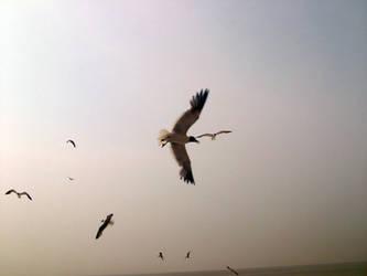 Sea Gulls 1