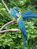 Birds 1 by creativenature-stock