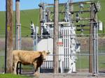 cow power II