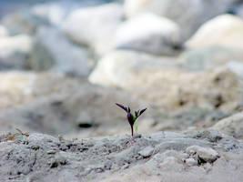 determination by erikschorr
