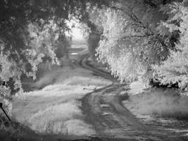 infrared::backroad canopy by erikschorr