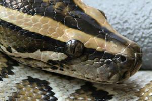 ten's snake by erikschorr