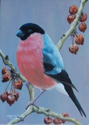 A Bullfinch by huckerback6