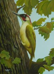 A Green Woodpecker in an English Oak by huckerback6