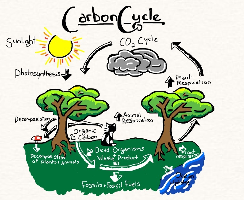 Carbon cycle by annanimus on deviantart carbon cycle by annanimus ccuart Gallery