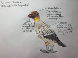 Emperor Vulture