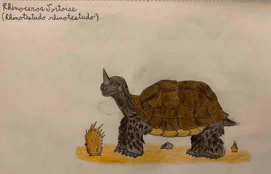 Rhinoceros Tortoise