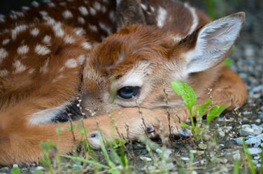 Bambi by mozella78