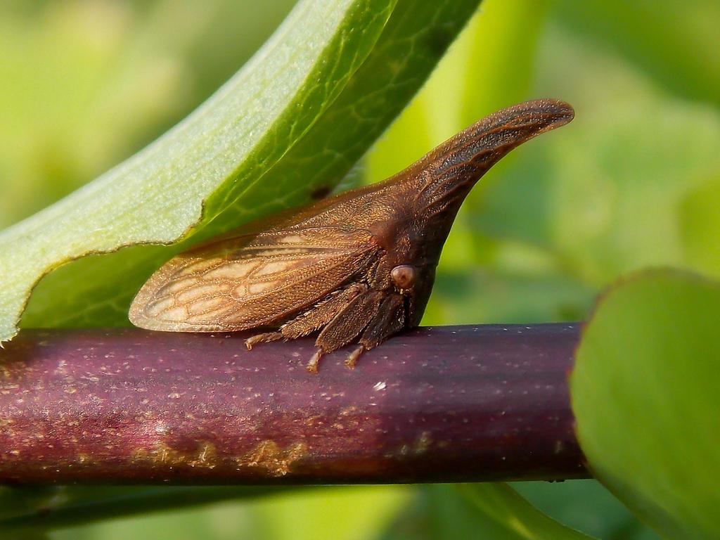 Thorn Bug by mozella78