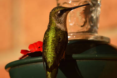 Hummingbird by mozella78