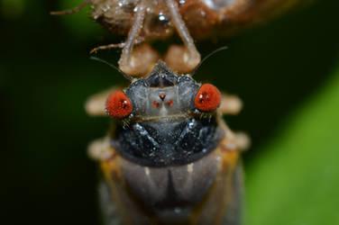 Cicada by mozella78