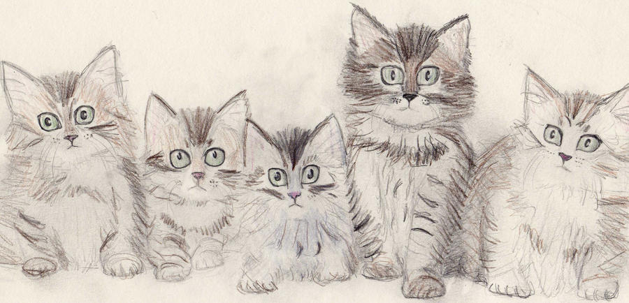 pictures of kittens to colour