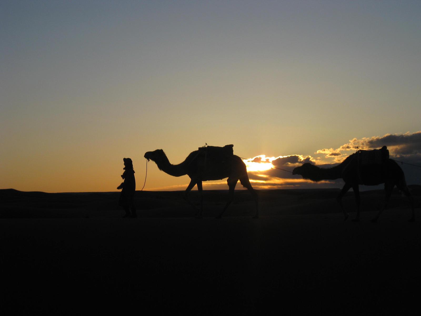 Desert Caravan by roxy-z on DeviantArt