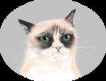 Tard the Grumpy cat