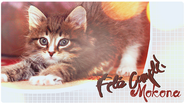 FELIZ CUMPLEAÑOS MOKONA. Cat_by_thamychan-d6ibkmg