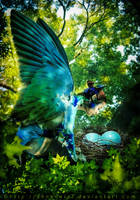 Nesting bird by annewipf