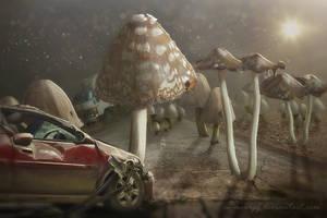 Mushrooms by annewipf