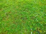grass by annewipf