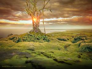 Mossy Land by annewipf