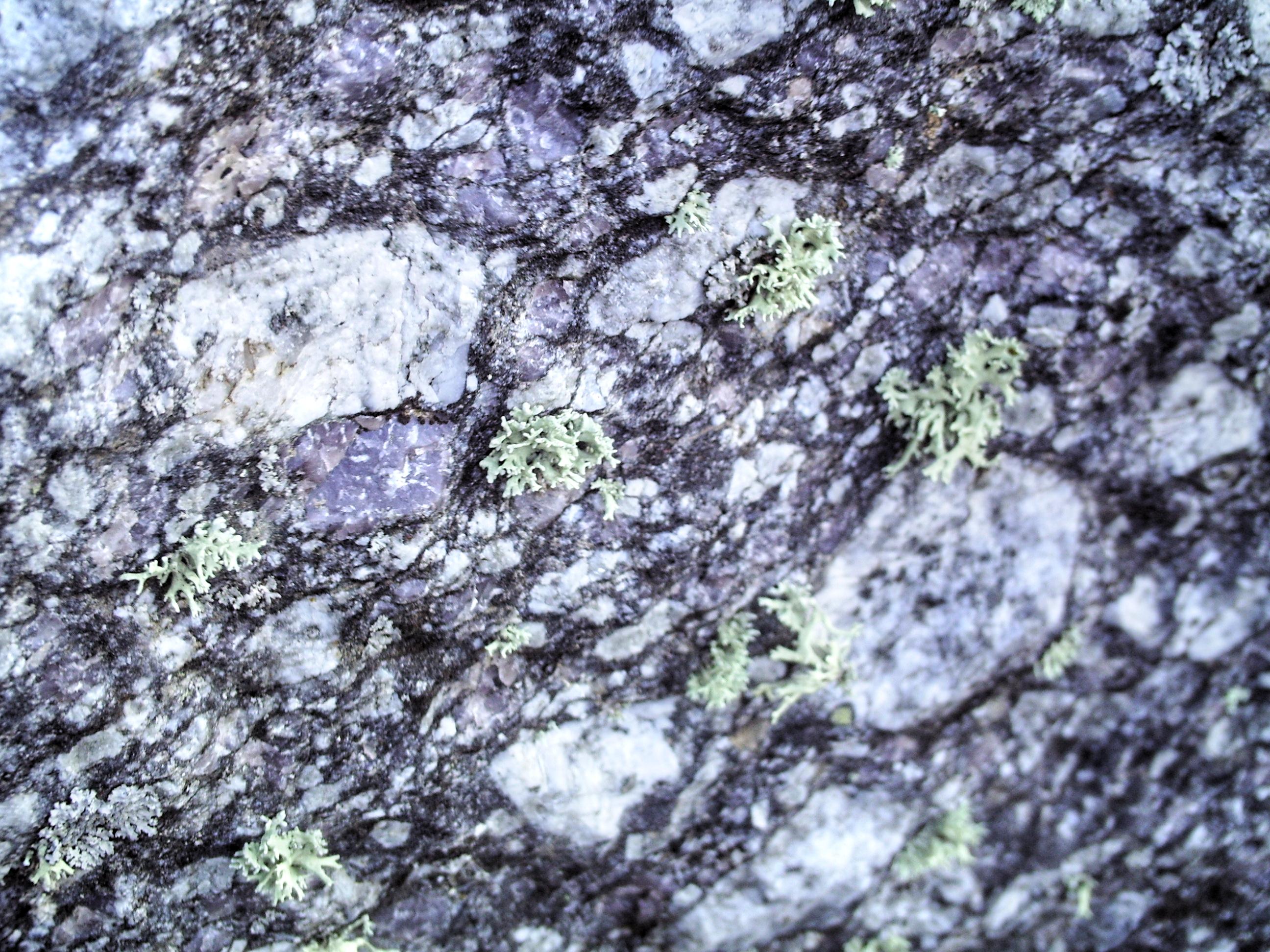 Resultado de imagen de ollos de sapo gneis