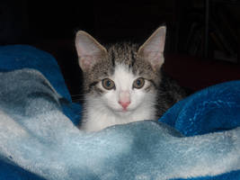 Lucky my little tomcat