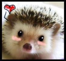 Kawaii Hedgehog by Shirubaa-kun
