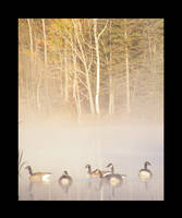 Foggy water Fowl by jesse-botanical