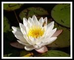 Buzz Along by jesse-botanical