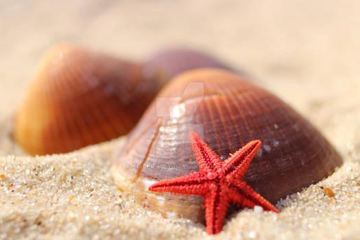 Alternative Seashell and Starfish