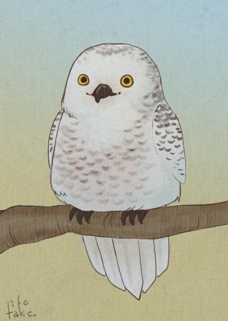 Snowy Owl by life-take
