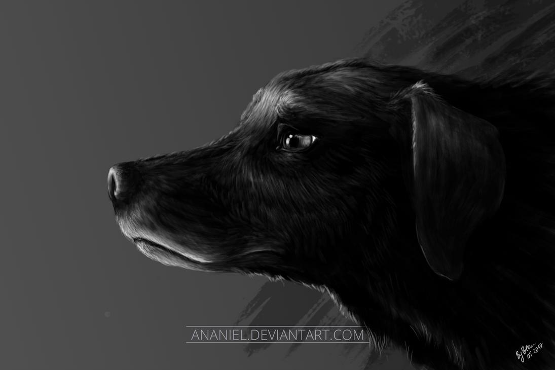 Labrador by Ananiel