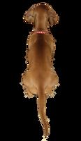 Miniature Daschund (Chirpa) PNG