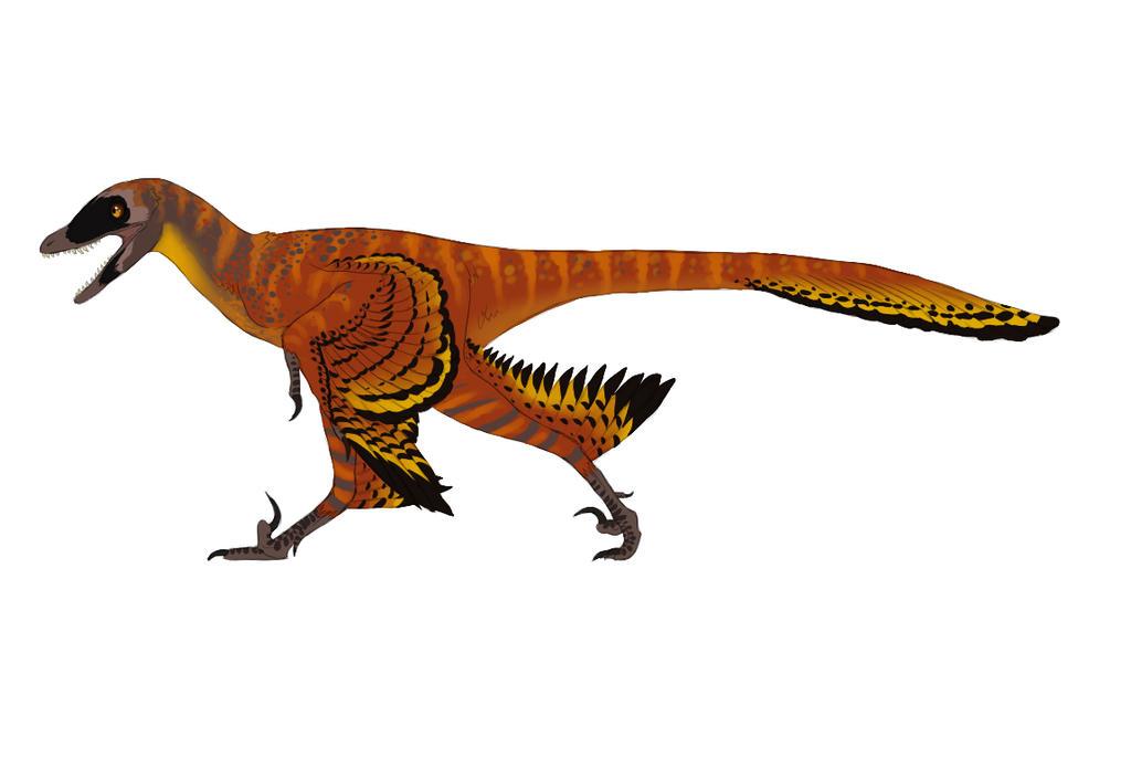 Image result for sinornithosaurus